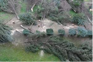 taglio-alberi-alvanite