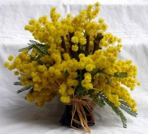 mazzo-di-mimose