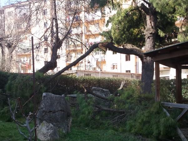 emergenza-neve-alberi-abbattuti