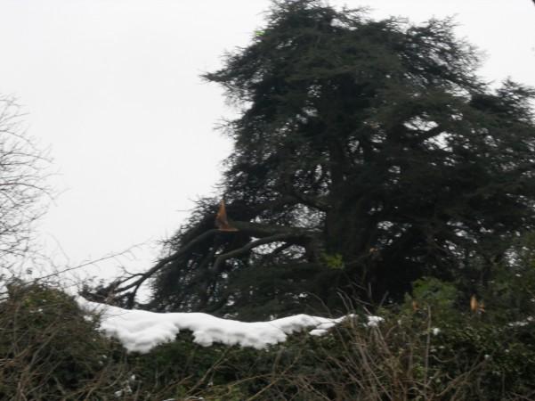 palazzo-caracciolo-danni-agli-alberi