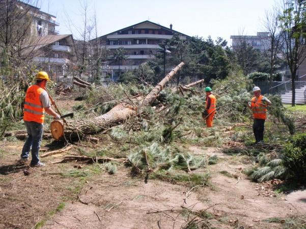 taglio alberi villa comunale