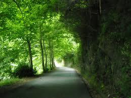 potatura-alberi-lungo-le-strade