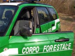 auto-forestale