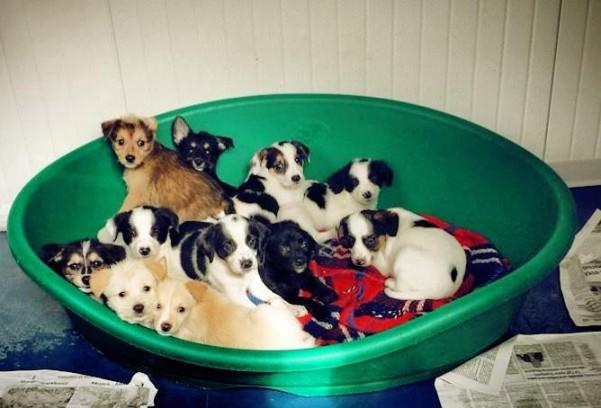 tredici-cuccioli-al-canile-di-atripalda