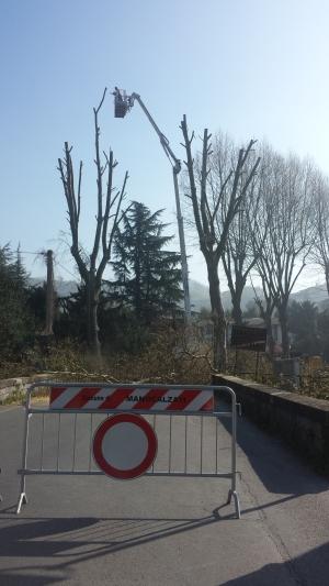 Taglio platani via Circumvallazione2