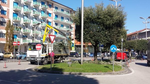 potatura lecci in piazza Umberto1