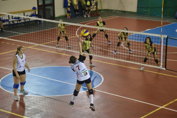 Phoenix solofra - Green Volley_2