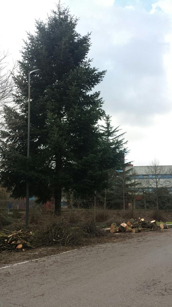 Taglio alberi lungo contrada Santissimo2