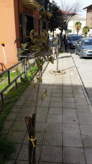 Foto alberi piantati 2
