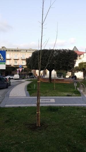 Foto alberi piantati